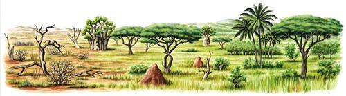 ernst klett verlag vegetationszonen die zone der savannen und trockenw lder schulb cher. Black Bedroom Furniture Sets. Home Design Ideas