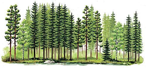 ernst klett verlag vegetationszonen die zone der borealen nadelw lder schulb cher. Black Bedroom Furniture Sets. Home Design Ideas