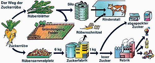 Herstellung Zucker